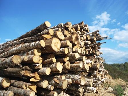 липовые дрова от производителя