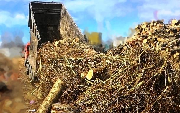 принимаем спиленные деревья на утилизацию