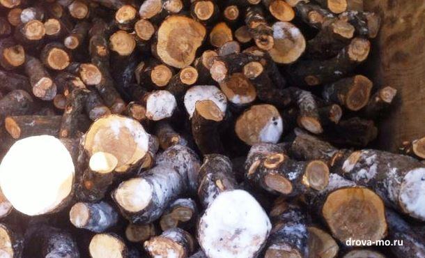 дрова из яблони