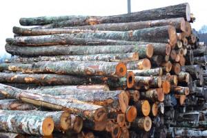 штабель леса у орудьево дмитровского района